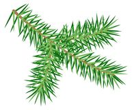 Green spruce branch isolated on white background. Vector illustration icon Stock Photography