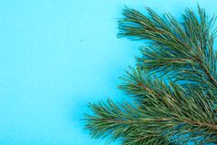 Green spruce branch, pine trees on background for text Royalty Free Stock Photo