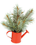 Green Spruce Branches Bunch Royalty Free Stock Photography