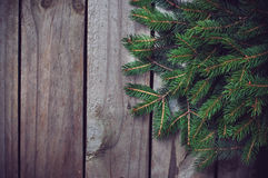 Green spruce branches Royalty Free Stock Photos