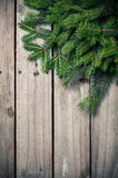 Green spruce branches Stock Photo