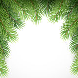 Green spruce branches like Christmas frame. Vector Stock Photography