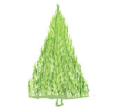 Green spruce Royalty Free Stock Image