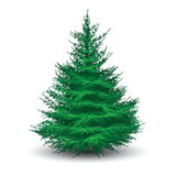 Green spruce tree. On white. Realistic vector illustration Royalty Free Stock Photos