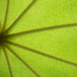 Green square Royalty Free Stock Photography