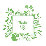Green square frame with collection of plants. Silhouette of branches isolated on white background Royalty Free Stock Photo