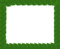Green square frame from leaves Royalty Free Stock Images