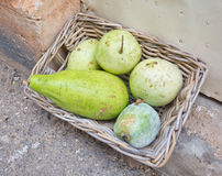 Green squash like fruits Royalty Free Stock Images