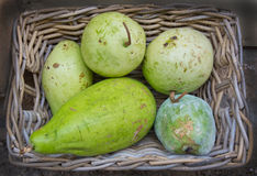 Green squash like fruits Stock Images