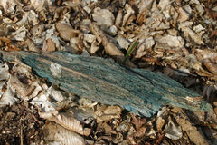 Green stained dead wood Royalty Free Stock Image