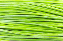 Green stalk. Group of Green stalk and background Stock Photos
