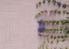 Green stalks with blue and pink flowers are on the right on sack Stock Photos
