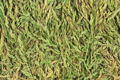 Green stalks spring grass  background Stock Images