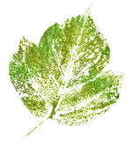 Green stamp of leaf Royalty Free Stock Image