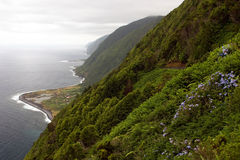 Green steep with coast Stock Image