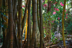 Green stem bamboo grove forest flowers Royalty Free Stock Photography