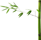 Green stem with isolated bamboo leaves Royalty Free Stock Images