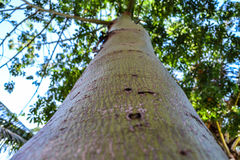 Green Stem. Of a Young Tree royalty free stock photo