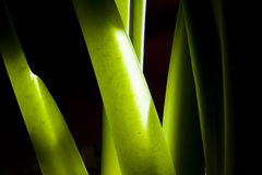 Green stems Royalty Free Stock Image