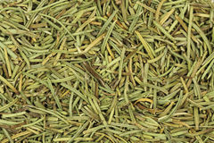 Green stems dried rosemary  background Royalty Free Stock Image