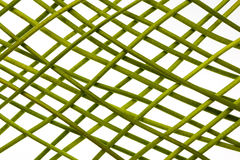 Green stems in grid Royalty Free Stock Photos