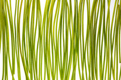 Green stems Royalty Free Stock Images