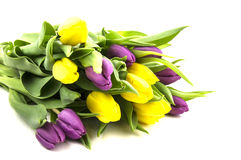 Yellow and purple tulips with green stems Stock Image