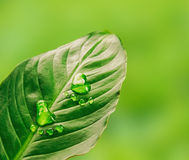 Green step, close-up Royalty Free Stock Photography