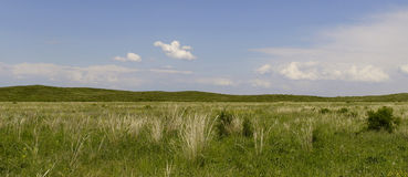 Green steppe. Beautiful green spring steppe and wonderful blue sky Royalty Free Stock Photography