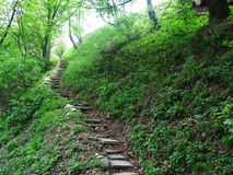 Green steps. Steps in the forest Stock Photography