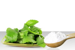 Green Stevia and extract powder in wooden spoon on white background Stock Images