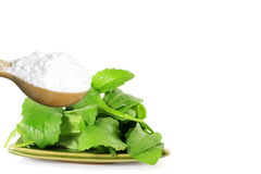 Green Stevia and extract powder in wooden spoon on white background Royalty Free Stock Image