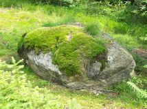 Green stone. In the forest Royalty Free Stock Photography