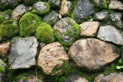 Green stone. Stone are covered by moss in the wild Royalty Free Stock Image