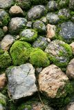 Green stone. Stone are covered by moss in the wild Stock Photo