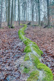 Green Stone Furrow in a forest in Bavaria Stock Photos