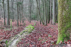 Green Stone Furrow in a forest in Bavaria Royalty Free Stock Photos