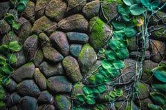 Green stone wall Stock Photography