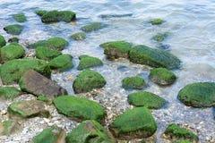 Green stones on the seashore. Algae. Royalty Free Stock Photo