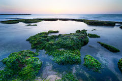 Green Stones in Tel Aviv Stock Image