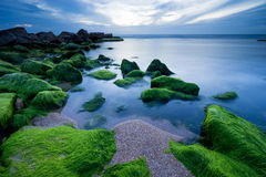 Green Stones in Tel Aviv Stock Photography