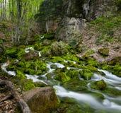 Green stream Royalty Free Stock Image