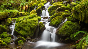 Green Stream Stock Photography