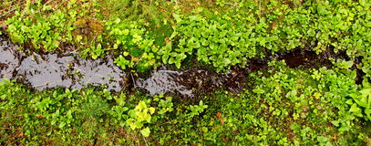 Green Stream Stock Images