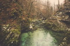 Green stream water and mossy on rocks in forest. Green stream water like emerald and mossy on rocks in autumn forest, Perspective of river flow gently beside Royalty Free Stock Photos