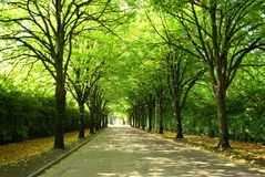Green street. Tree lined street in cork ireland Royalty Free Stock Image