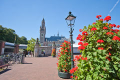Green Street of The Hague. Flowers on the streets of the city. Ancient architecture. Flowers and trees on the background of a building Royalty Free Stock Photo