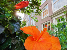 Green Street of The Hague. Flowers on the streets of the city. Ancient architecture. Flowers and trees on the background of a building Stock Photo