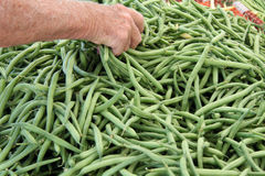 Green string beans Royalty Free Stock Photos