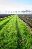 Green strip between fields with tire tracks of a tractor Royalty Free Stock Photo